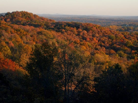 Fall foliage throughout Williamson County.