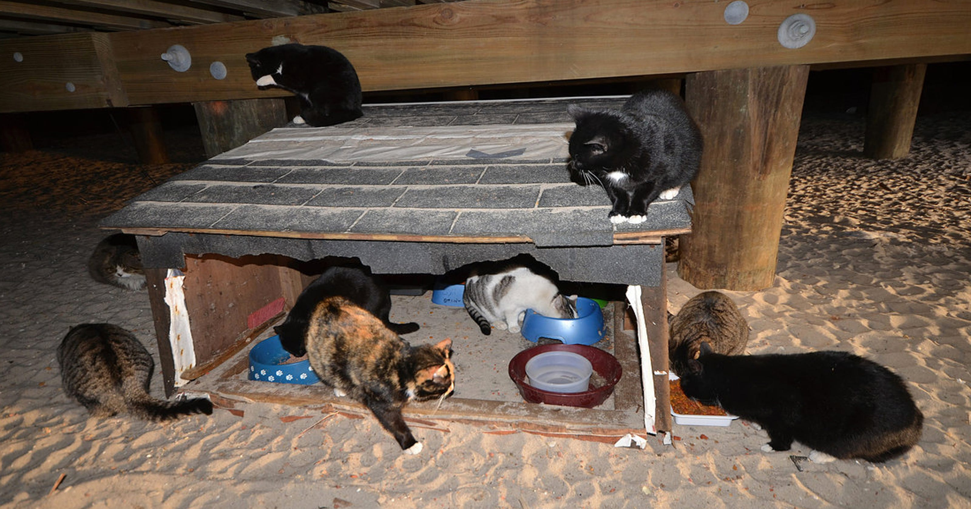 826b11e59e33 Clarkstown fails to craft a sensible TNR program to curb feral cats