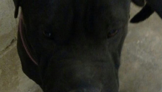 This 2-year-old black female Shar-Pei mix dog was found in the 1200 block of Hawaii Avenue. Her adoption fee is $139.29. For more information about adopting a Pet of the Week or other furry friends visit Alamogordo Animal Control, 2910 N. Florida Ave., Monday through Saturday between noon and 5 p.m. or contact them at 439-4330.