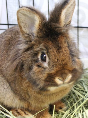 Thumper, the Oshkosh Northwestern Pet of the Week, is waiting at the Oshkosh Area Humane Society for a forever home.