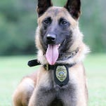 K9 Officer Bella, seen in a photo submitted by the Marion Police Department.