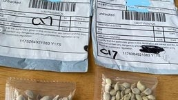 The mysterious seeds have been arriving in packaging shipped from China.