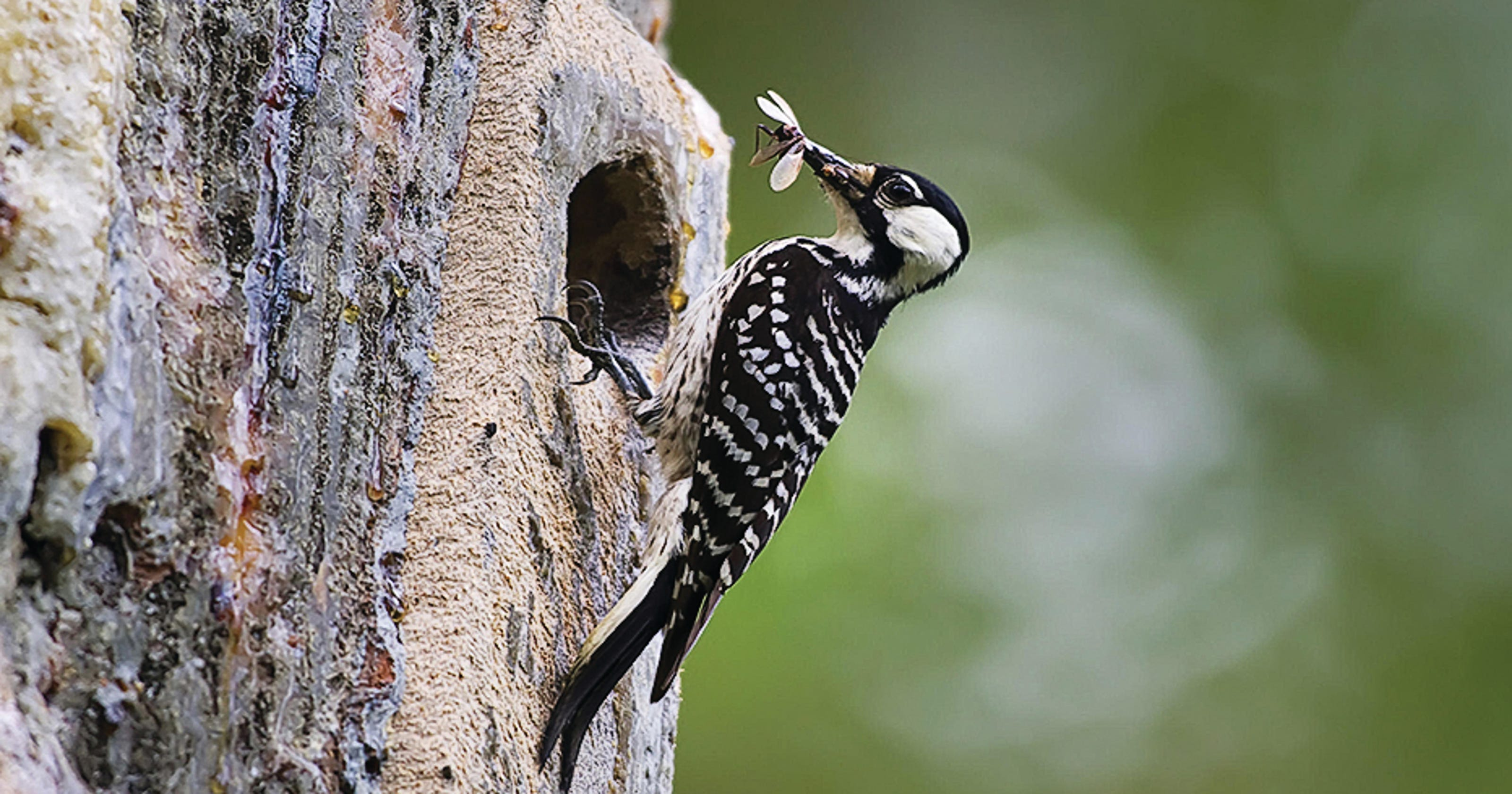 How Much Woods Does A Woodpecker Need To Succeed