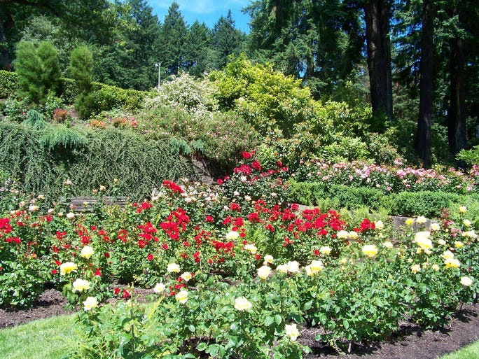 International Rose Test Garden in Portland.