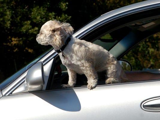-Doggie in the window.jpg