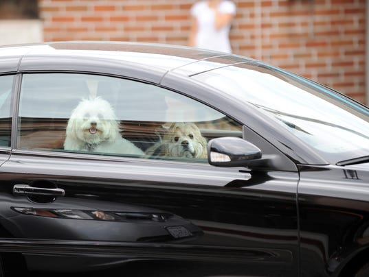 Two pampered pooches ride shotgun in the