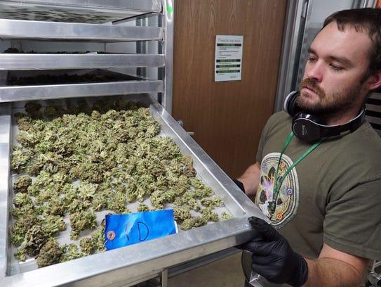 Eric Benevento, a marijuana production and quality