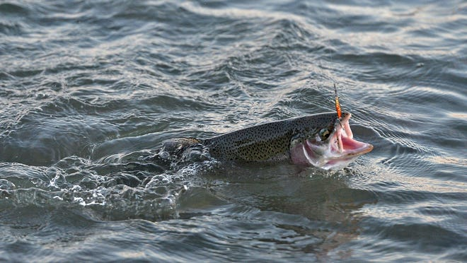A steelhead is reeled in, Oct. 11, 2019, at Avonia Beach, near the mouth of Trout Run in Fairview Township. The first steelhead have arrived at the mouth of Trout Run ahead of the fall 2020 run. [CHRISTOPHER MILLETTE/ERIE TIMES-NEWS