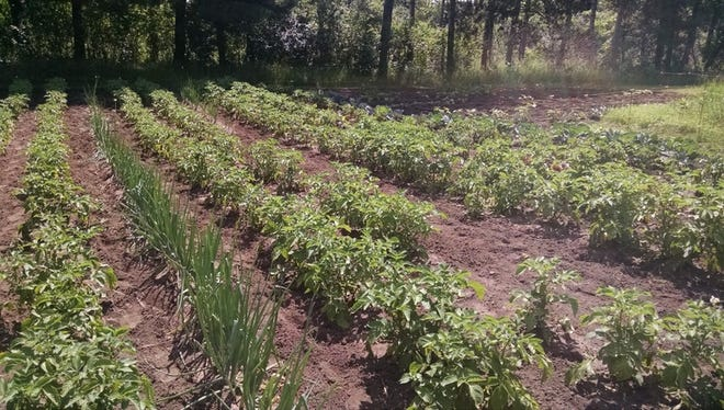 Growing your own vegetables is an old idea—but still a good one.