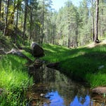 Clover Creek trickles through a pristine, green canyon on the Mogollon Rim.