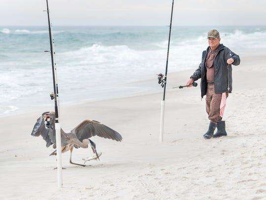 Nick Carballo, of Lillian, Alabama, watches a bird