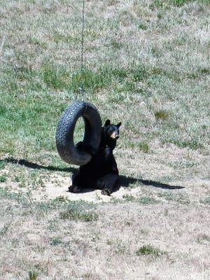 """Karen Hunt of Chanceford Township submitted this photo Aug. 6. Hunt writes, """"'Hey, Where did everybody go?' Taken at The Wildlife Sanctuary in Colorado a few years ago. Ricki now lives here. Its amazing!"""""""