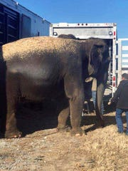 Elephants are transferred to another trailer for transportation to Iowa after the floor of the trailer they were riding in started to give way on U.S. 69 near Eufaula, Okla. Jan. 24, 2018