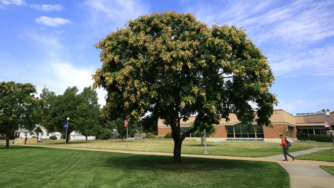 Hutchinson Community College has been named as a 2019 Tree Campus USA as part of The Arbor Day Foundation's national program.