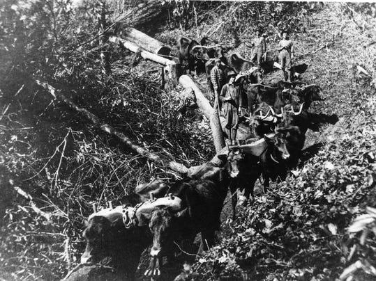 Oxen team pulls logs from Clough Farm fr Transylvania County Library.jpg
