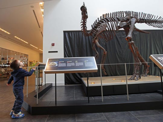 At the Delaware Museum of Natural History, a few dinosaur bones have been broken, but they were ruled as accidents.