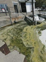 Blue-green algae and foam in Canandaigua Lake, 2014