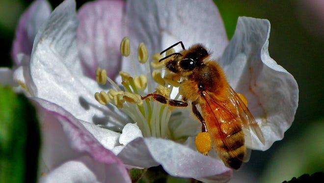 Bees are hard at work at Trigger Happy Ranch.