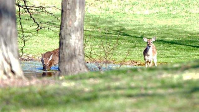 Deer-gun season opens for Ohio starting Monday and running through Dec. 4 and again on Dec. 17 and 18.