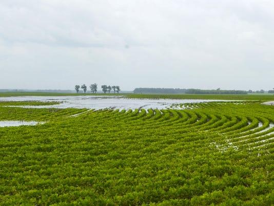 Planting Delays Wet W_Atki