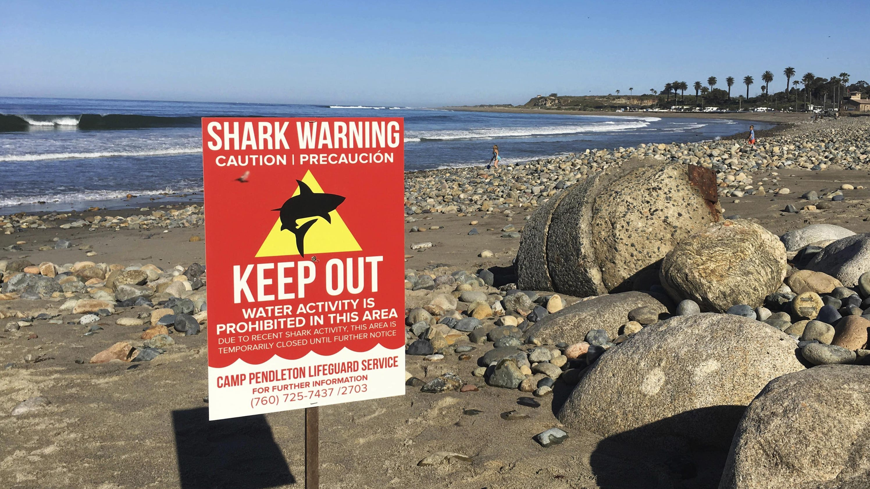 Dc5n United States Criminal In English Created At 2017 05 01 0833 Wiring Wizards Rehoboth Beach A Shark Attacked Woman Wading The Ocean With Friends Tearing Away Part Of Her Upper Thigh Off Popular Southern California Authorities And
