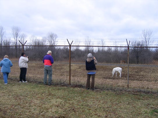 Tourists often pull over when the white deer are spotted