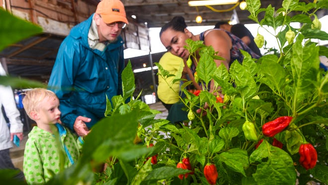 Dededo resident Jeanie Yanger describes the various pepper plants she had on display to hot sauce shopper, John Maddox, during the Mangilao Donné Festival on Saturday, Sept. 9, 2017.