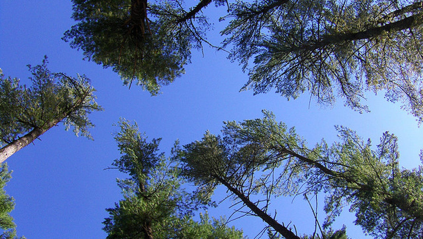 Apple invests in maine forest to eliminate footprint for Stahlwandbecken 3 60 x 0 90