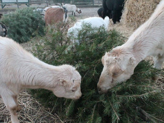 Goats-with-tree.jpg