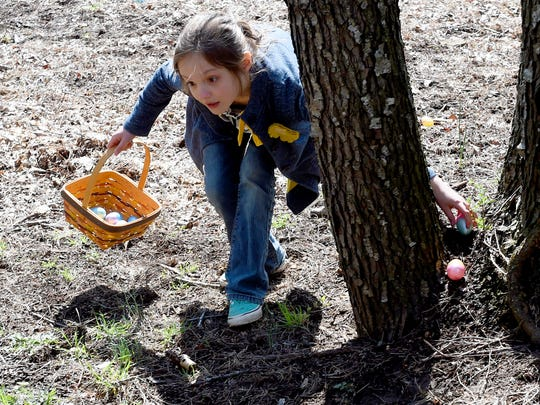 An egg hunter never stops moving as she reaches for eggs in the crook of a tree while moving steadily around it at last year's Eggstravaganza in Staunton.