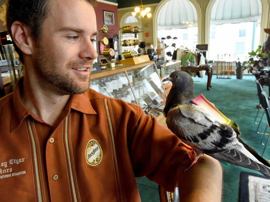 Frankie the pigeon perches on the arm of Aaron Miller,