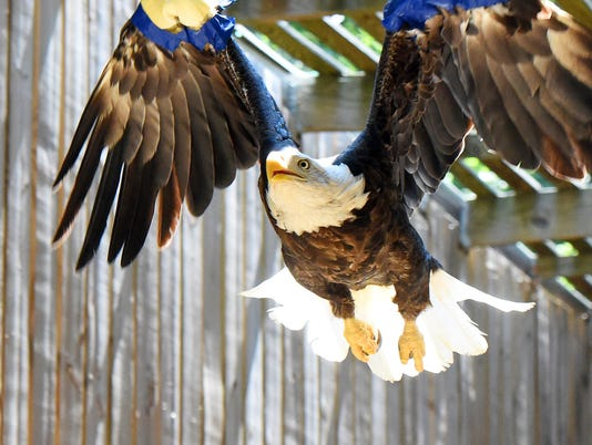 Eagles scheduled for release