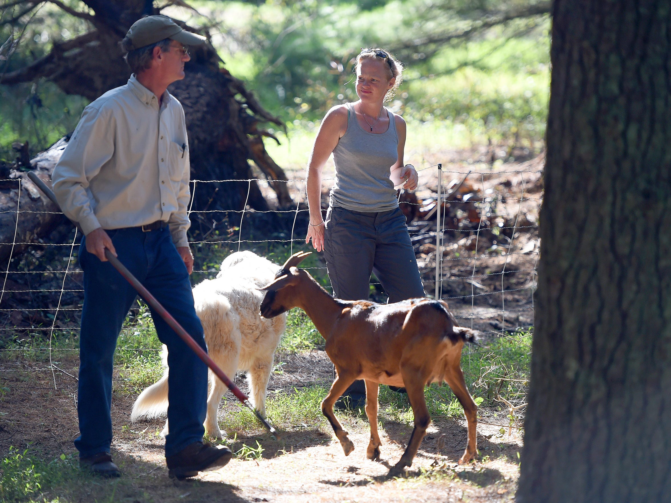 Sherrie Hannah speaks with Jace Goodling, owners of Goat Busters, who prepares to round up the goats after they've finished clearing a section of property on land near Churchville on Sept. 11, 2015. Hannah and her friend, Katie Shelton, enlisted the services of Goat Busters to help clear a section of land originally left to grow wild for 10 years.