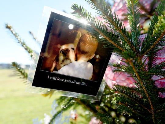 A laminated photograph is among decorations on a tree