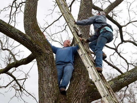 Jason Wolfe holds the three section extension ladder in place as Roger Offenbacker checks to see how steady a climb it offers. The pair volunteer their time to help rescue a cat named Rufus who has been stuck on a limb 100 feet off the ground for seven days, refusing to come down, on Tuesday, Dec. 22, 2015.