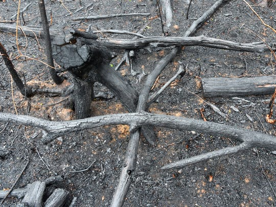 Burned branches and scorched earth in a section of forest that already burned in the Rocky Mountain fire in the Shenandoah National Park, just off the Skyline Drive south of Elkton. Photo taken on Thursday, April 28, 2016.