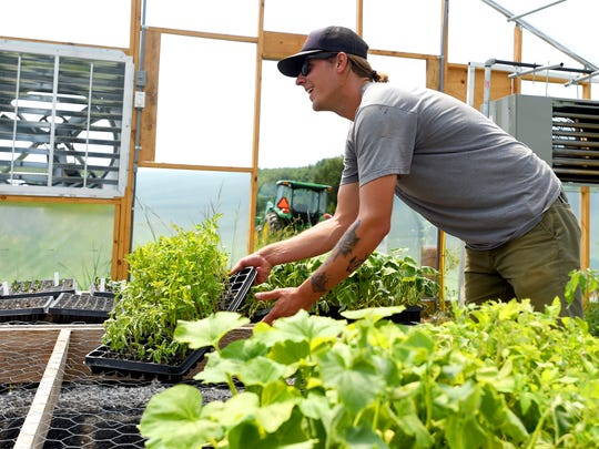 Farm manager Sam Berenstain move plants from the greenhouse