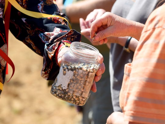 A person takes a couple of seeds of corn for planting from a container held by Mekasi Horinek of the Ponca tribal nation and Bold Alliance.  Members of the Cowboy and Indian Alliance visited Stuarts Draft to plant ÒSeeds of Resistance,Ó of corn sacred to the Ponca Nation of Oklahoma, in the path of the proposed Atlantic Coast Pipleline with the help of landowners and others on Monday, June 6, 2016.