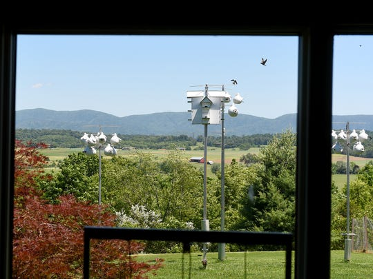 "A window offers Mixon Darracott a picture-perfect view of the purple martin colony he maintains. ""My wife will sit with me out some evenings, and we'll have a glass of wine and just watch the birds,"" says Mixon. ""She likes them — but I have to do the work."""