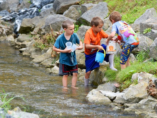 Boys fill buckets with water as they want to see how many fish Thomas Mitchell, 10, of Staunton can catch from a stream using a toy net in Gypsy Hill Park on Thursday, June 30, 2016.
