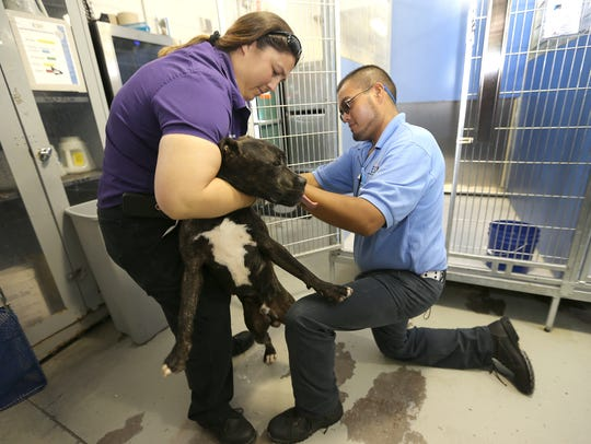 Kyla Young and Miguel Nunez worked with a dog Thursday
