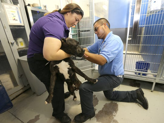 Kyla Young and Miguel Nunez worked with a dog Thursday at the city's Animal Services Shelter. Reforms at the shelter are included in the city's proposed budget, which includes a tax increase.