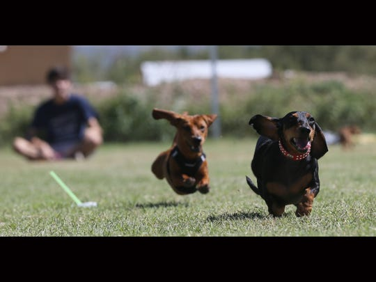 St. Luke's Country fair is known for its Great Dachshund Stampede.