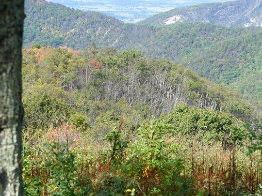 A section of the Shenandoah National Park which burned