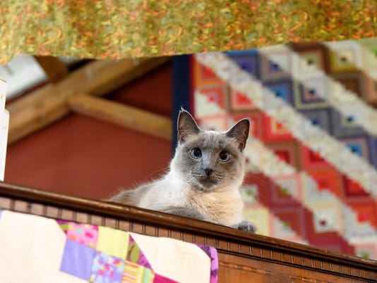 Cat mascot at Quilting Patch