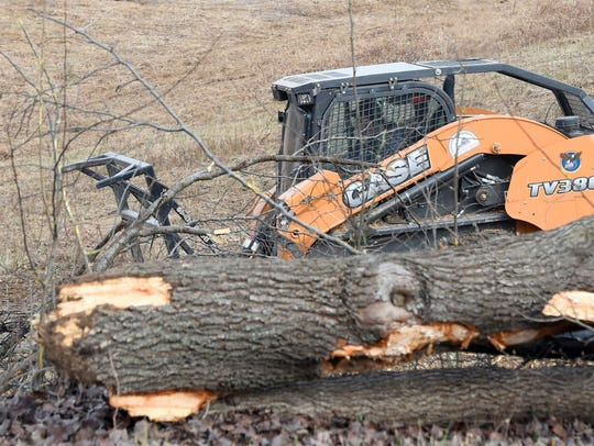 A skid steer helps with tree removal on land designated