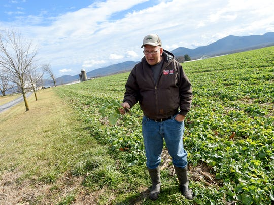 Glenn Rodes talks about the different types of crops grown at Riverhill Farm in Port Republic besides hemp during an interview on Dec. 12, 2016.