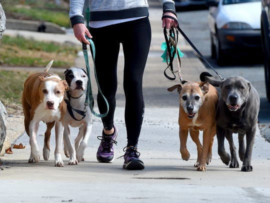 Ambrose, Athena, Maximus and Ares keep up with their