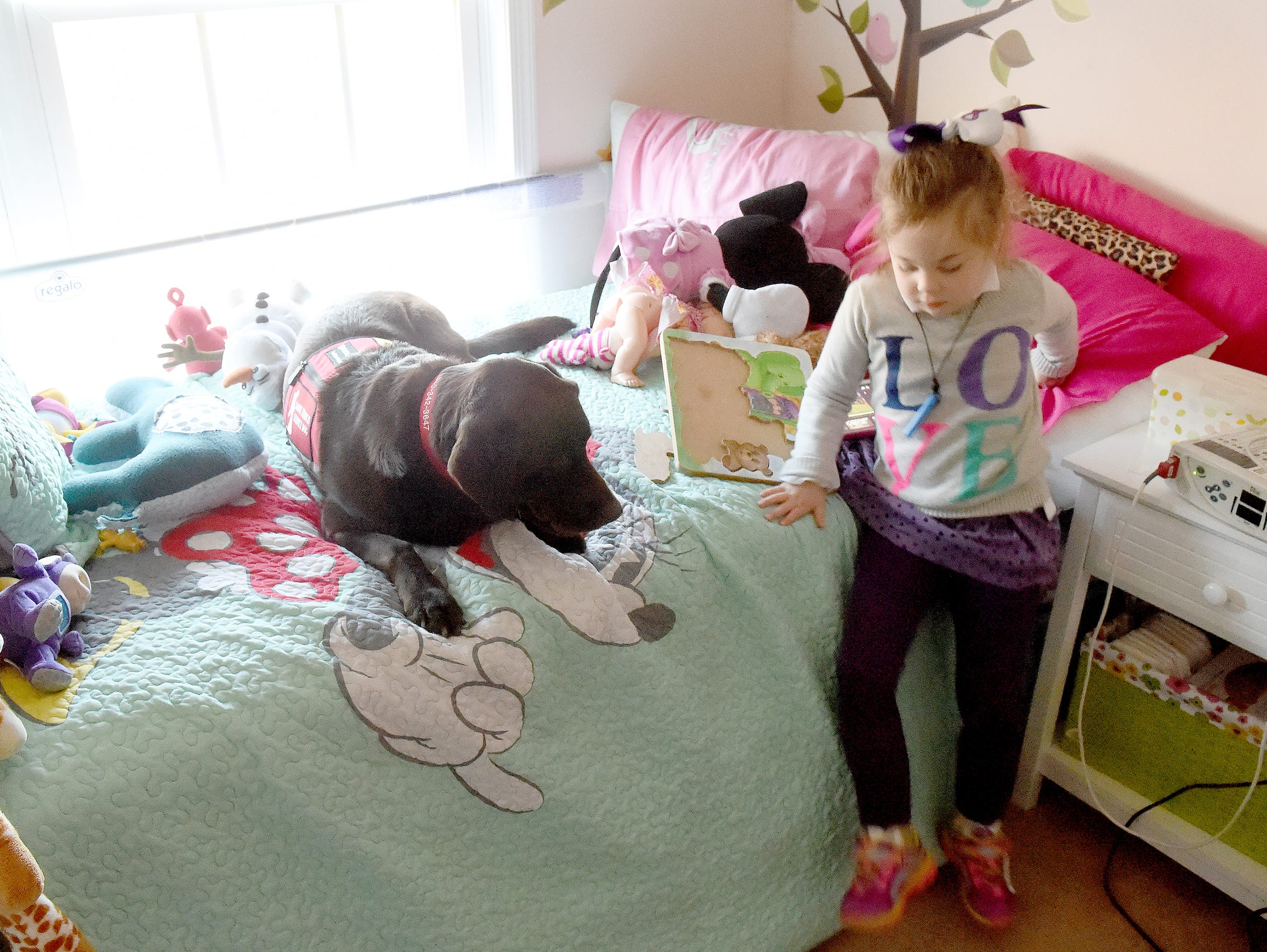 A service dog, Hazel hangs out with 5-year-old Lucy
