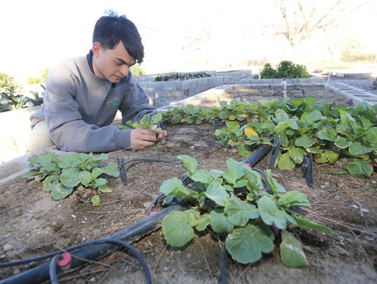 Stephen-Stresow-Master-Gardener-3.jpg